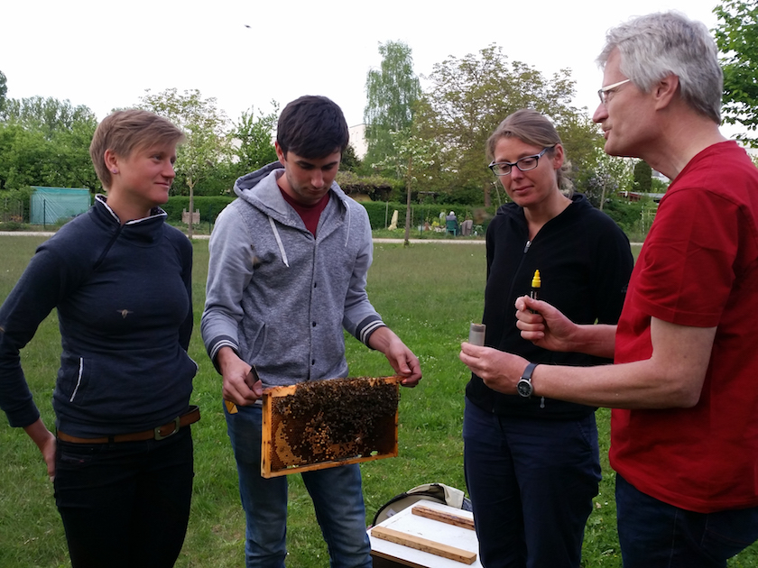 Zeichnen der Uni-Bienenkönigin