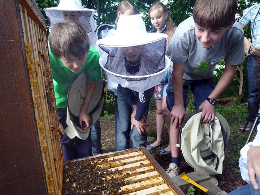 Kinder an offener Bienenbeute