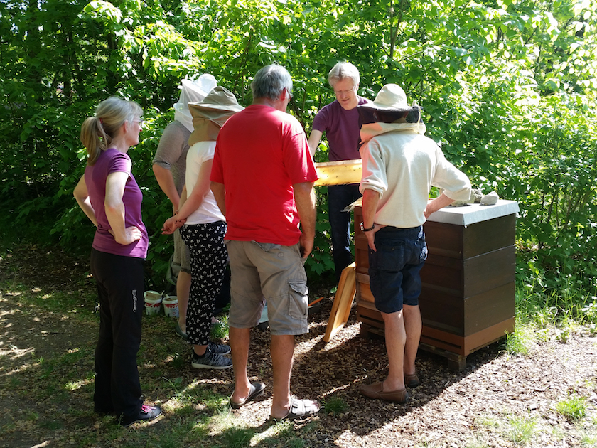 Gäste beim Blick in die Bienenvölker am Lehrbienenstand Fünferlessteg