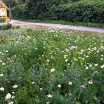Blühwiese im Bamberger Bienengarten Bienenweg 1, 96047 Bamberg (Erba-Park)