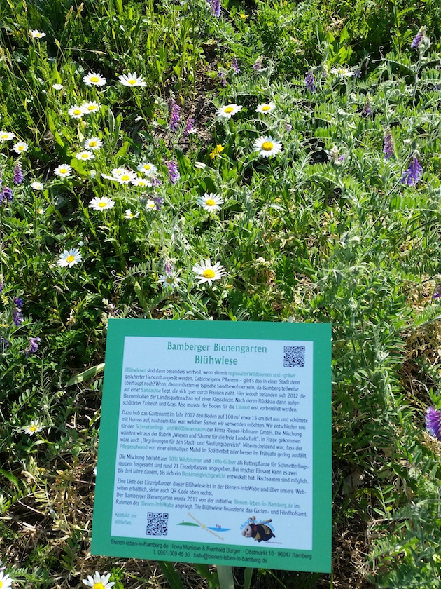 Blühwiese im Bamberger Bienengarten