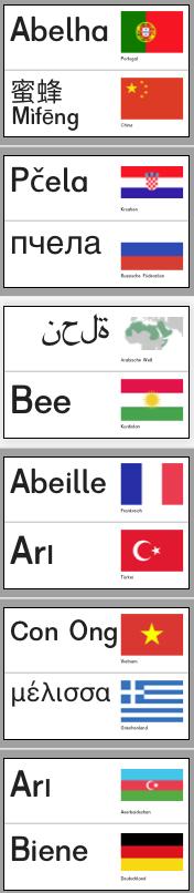 Biene mehrsprachig