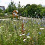 Wildbienenhotel vor der Blühwiese im Bamberger Bienengarten an der Bienen-InfoWabe