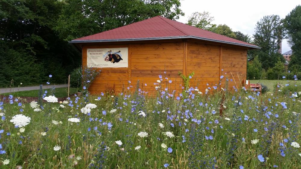 Blühwiese im Bamberger Bienengarten an der Bienen-InfoWabe