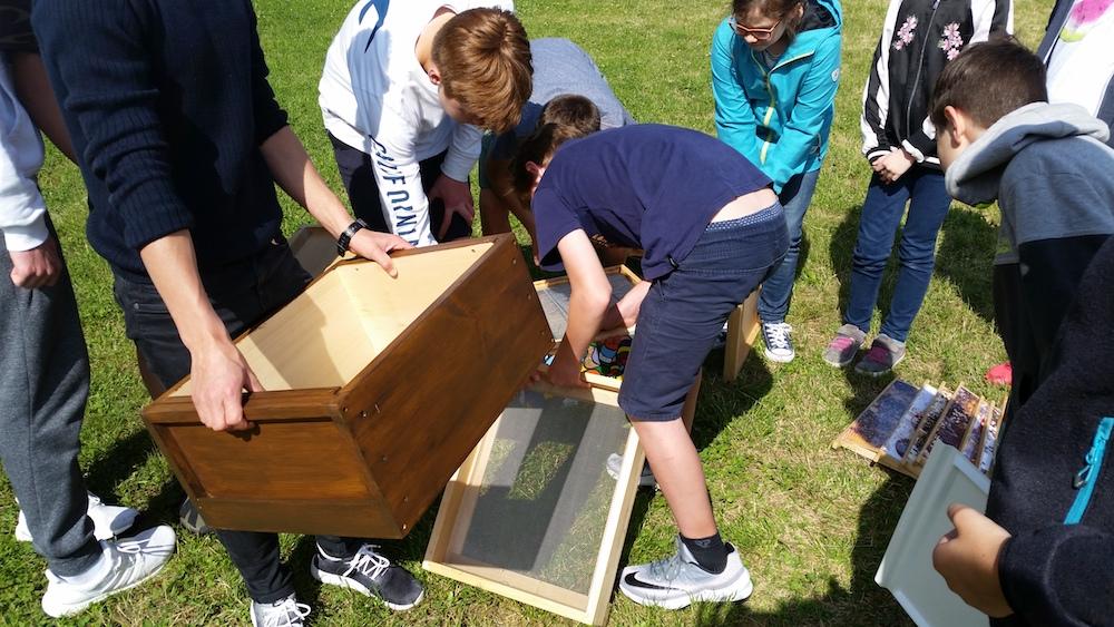 Montessori-Schüler setzen die vertreuten Teile einer Bienenwohnung (Beute) zusammen