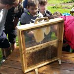 Montessori-Schüler beim Blick auf Bienen in der Schaufensterbeute