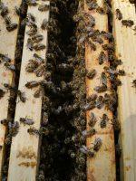 Aneinander gekettelte Baubienen