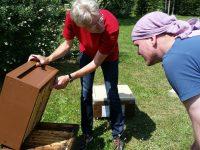 Bienenpate Stefan zur Weiselzellenkontrolle