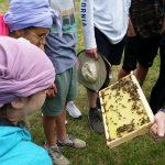 Montessori-Schüler beim Blick auf Bienen am Lehrbienenstand