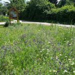 Blühwiese im Bamberger Bienengarten mit Wildbienenhotel