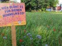 Blühwiese, gesehen in Bughof, Galgenfuhr