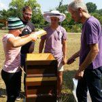 Modul 9: Honig ernten …