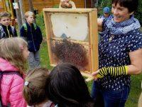 Echte Bienen im Schaufenster