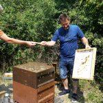 Bienenflucht abkehren