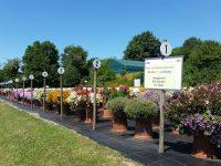 Versuchsaufbau Balkonpflanzen