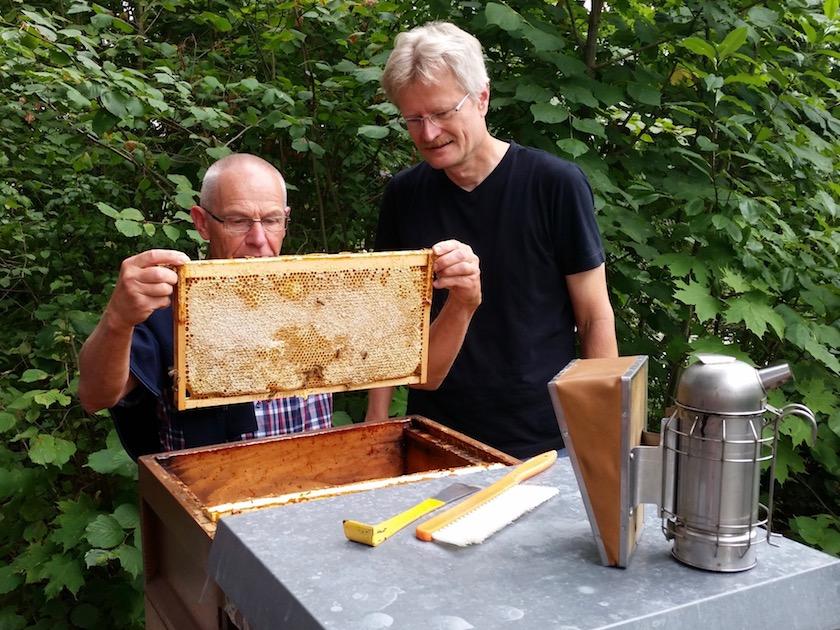 Honigwabe ziehen