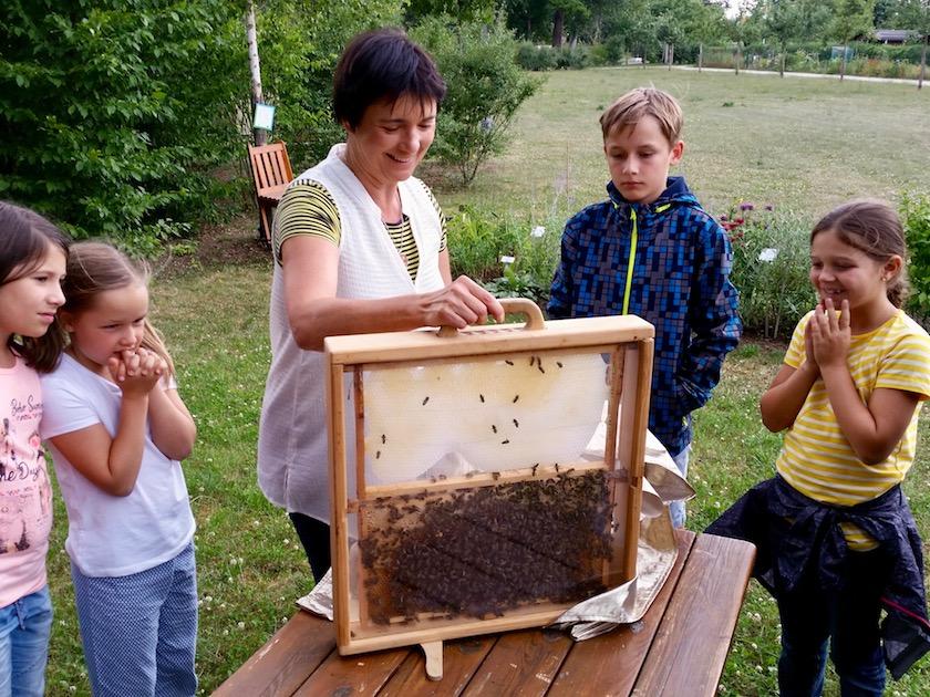 Bienen in der Schaufensterbeute