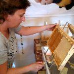 Susanne Böhmer entdeckelt eine Honigwabe.