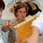 Susanne Böhmer reicht eine entdeckelte Honigwabe zum Schleudern.