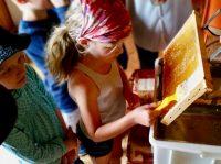 Entdeckeln einer Honigwabe