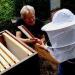 Honigwabe abkehren