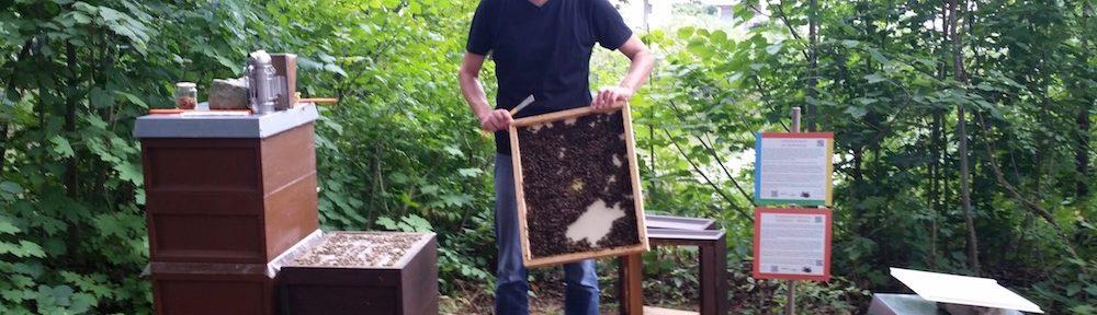 Reinhold zeigt die Bienenflucht