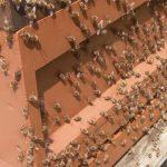 Bienen außerhalb der Beute