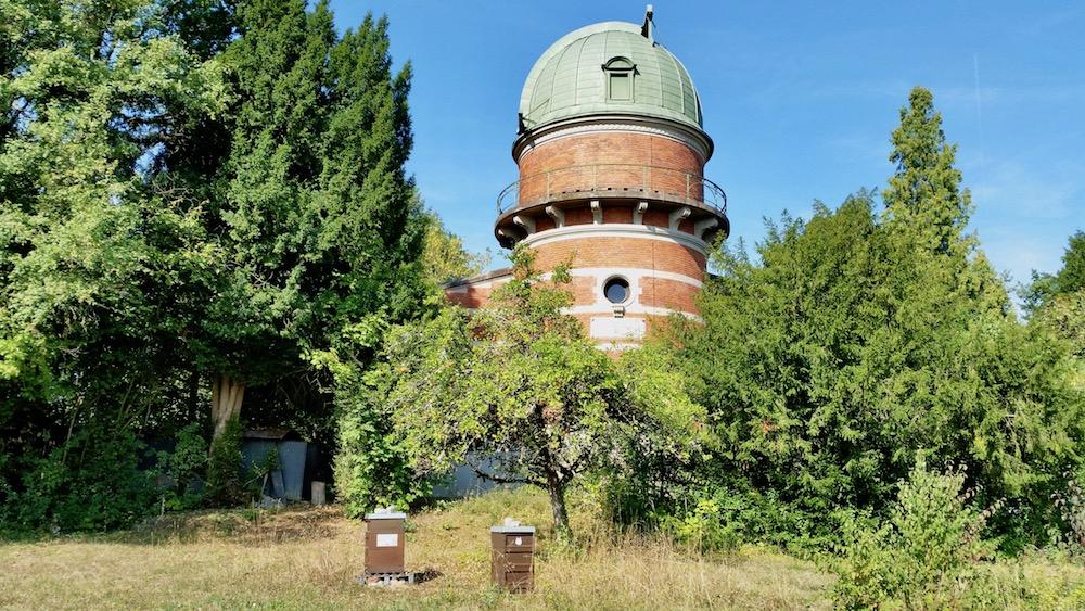 "Bienenvölker am Standort ""Berggebiet / Sternwarte"""