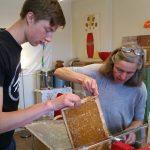 Befüllen der Honigschleuder