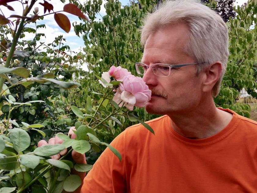 Reinhold riecht an Rosenblüte