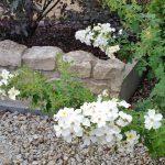 """Mauerschönheit """"Kew Gardens'"""