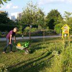 Mühselige Gießaktionen im Bamberger Bienengarten