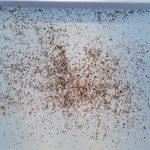 Varroakontrolle