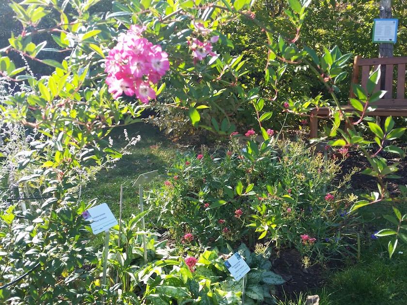 Der Bienengarten im Herbstflor