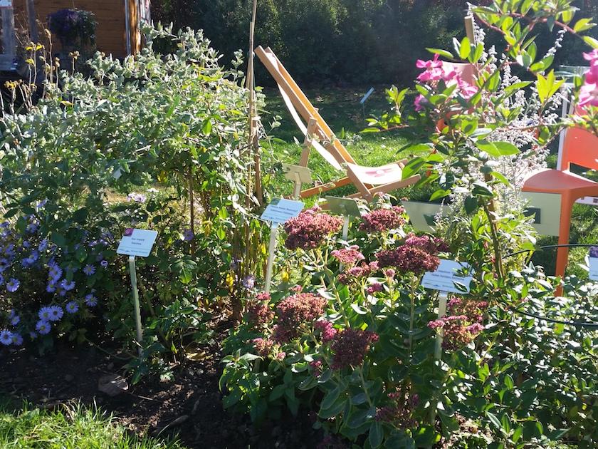 Der Bienengarten im Herbstflor (Schau-Staudenbeet2)