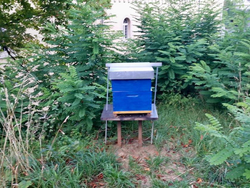 Bienen in der Stadt, Bienen des Bienenlehrpfades der Stadt Luxemburg