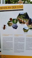 Bienen in der Stadt, Schild am Bienenlehrpfad Luxemburg