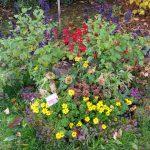 Schau-Grabanlage im Herbstflor