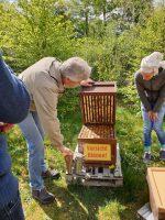 Reinhold öffnet Volk zur Weiselzellenkontrolle