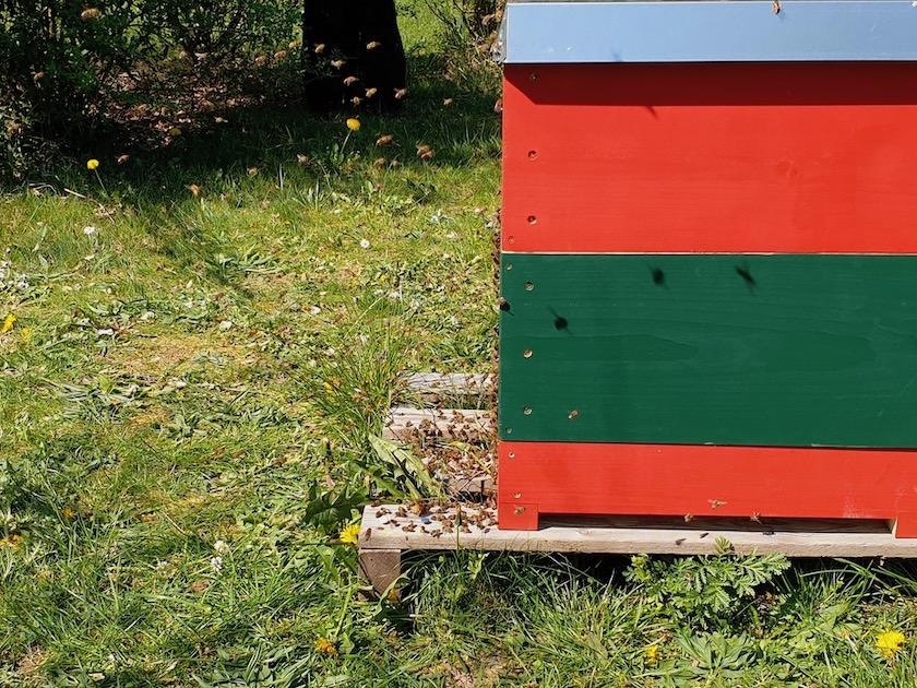 Nach Umsetzung orientieren sich die Bienen neu