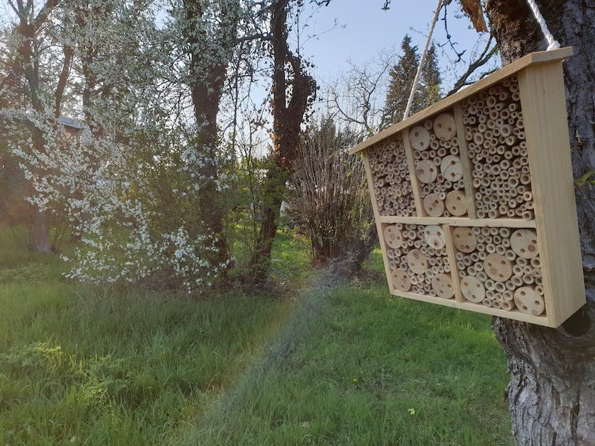 Bienenstandort Sternwarte Bamberg