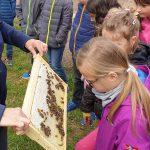 Am Lehrbienenstand. Unterricht der Bamberger Schulbiene