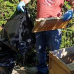 Sorgfältiges Verpacken der AFB-verseuchten Waben