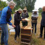 Spritzprobe / Honigernte am Bienenweg