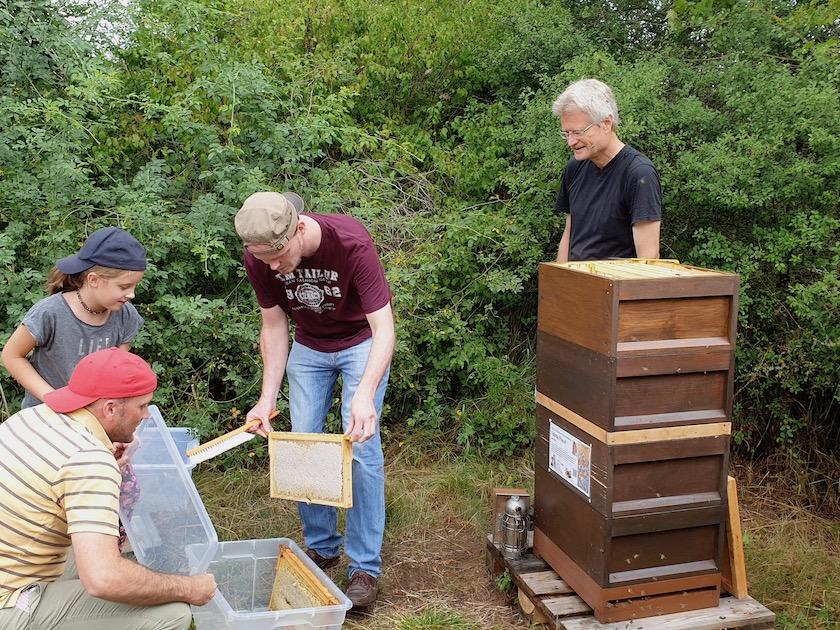 Gäste kehren Biene ab von Honigwaben