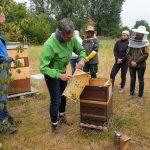 Abkehren Honigernte am Bienenweg