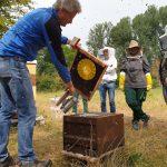 Bienenflucht / Honigernte am Bienenweg