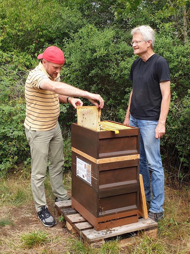 Gäste ernten Honigwaben