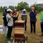 Honigernte am Bienenweg