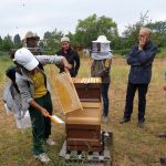 Abkehren / Honigernte am Bienenweg